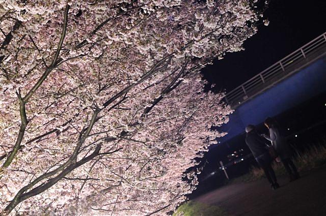 花見 (7)