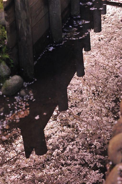 花見 (10)