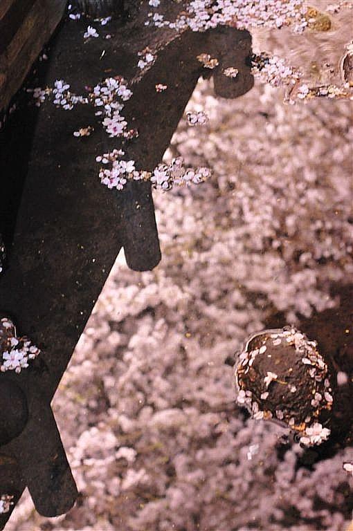 花見 (13)