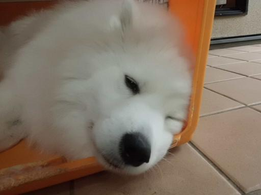 2012 11月蓮米のお目覚め! 003