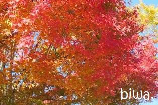 秋ですねぇ・・・