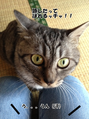 IMG_6622.jpg
