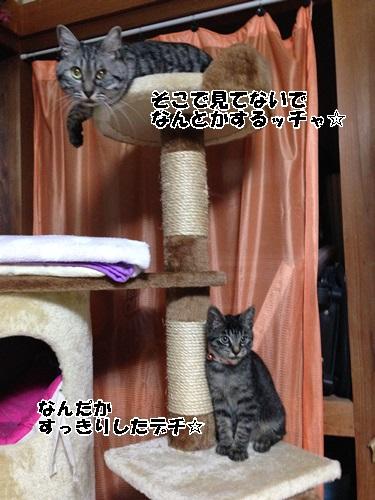 IMG_6919.jpg