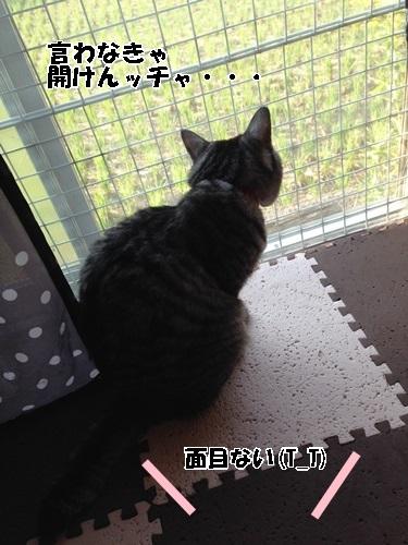 IMG_6995.jpg
