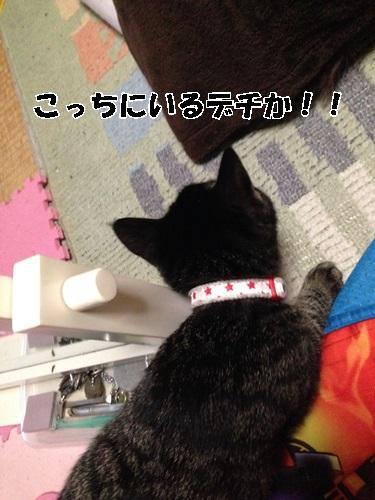 IMG_7175.jpg