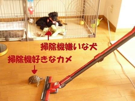 souziki2_20121014221018.jpg