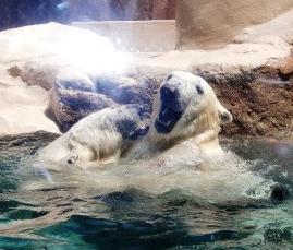 動物園18