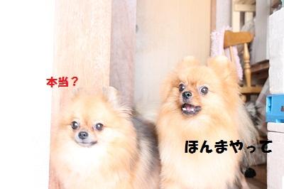 ぽひな (2)