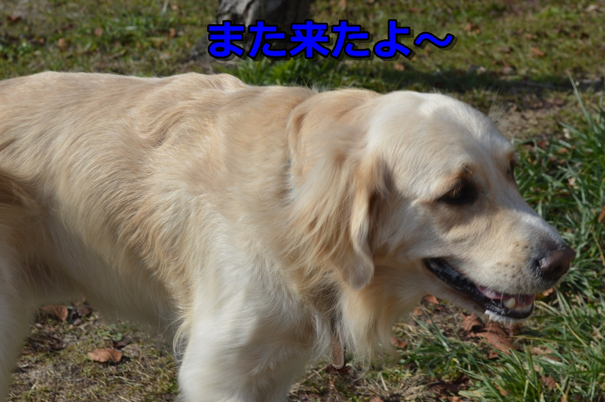 DSC_0557-014.jpg