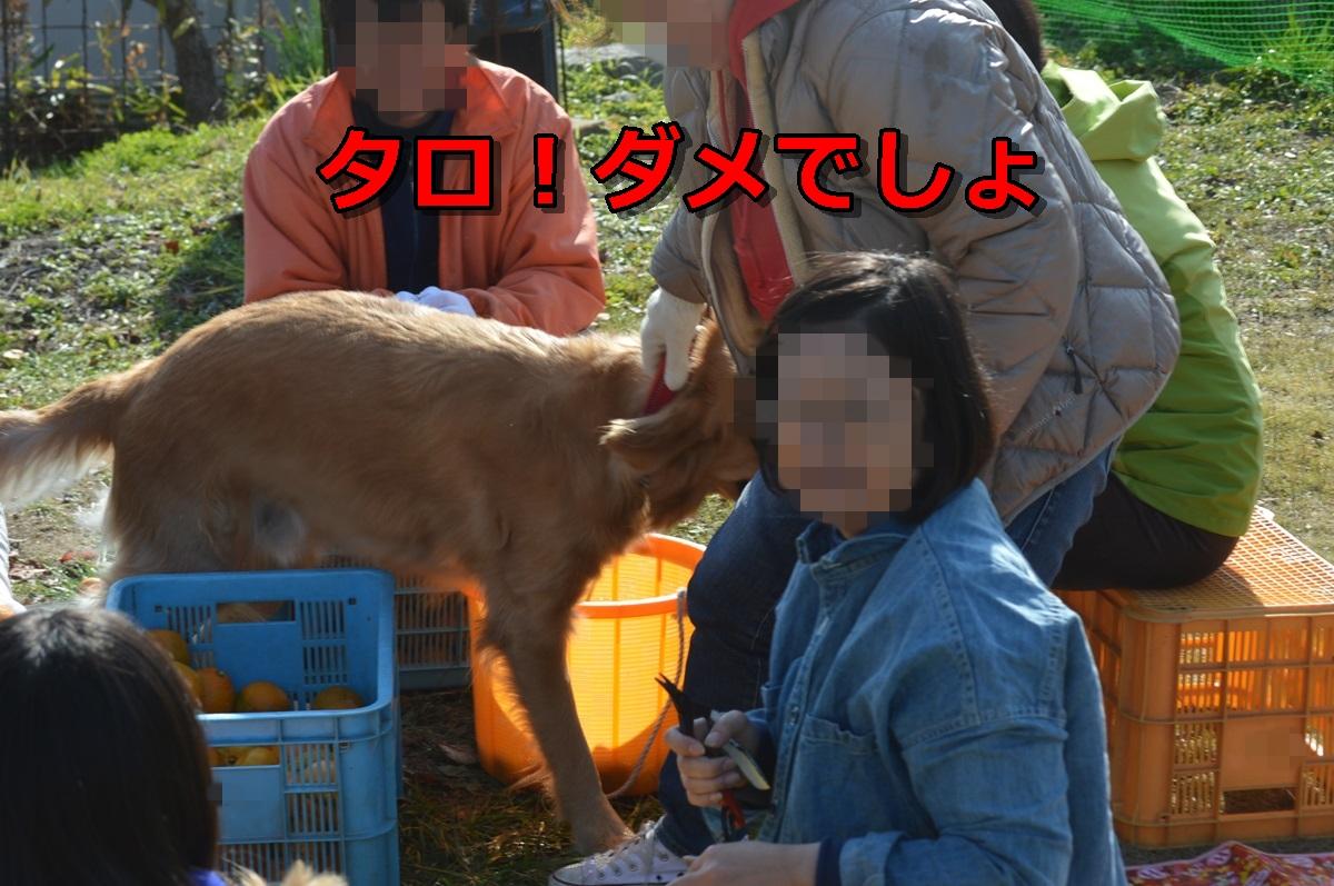 DSC_0638-095.jpg