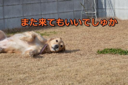 DSC_1107-006.jpg