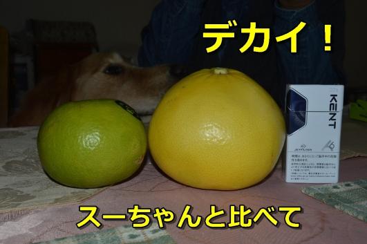 DSC_1753-036_201312272057132c5.jpg