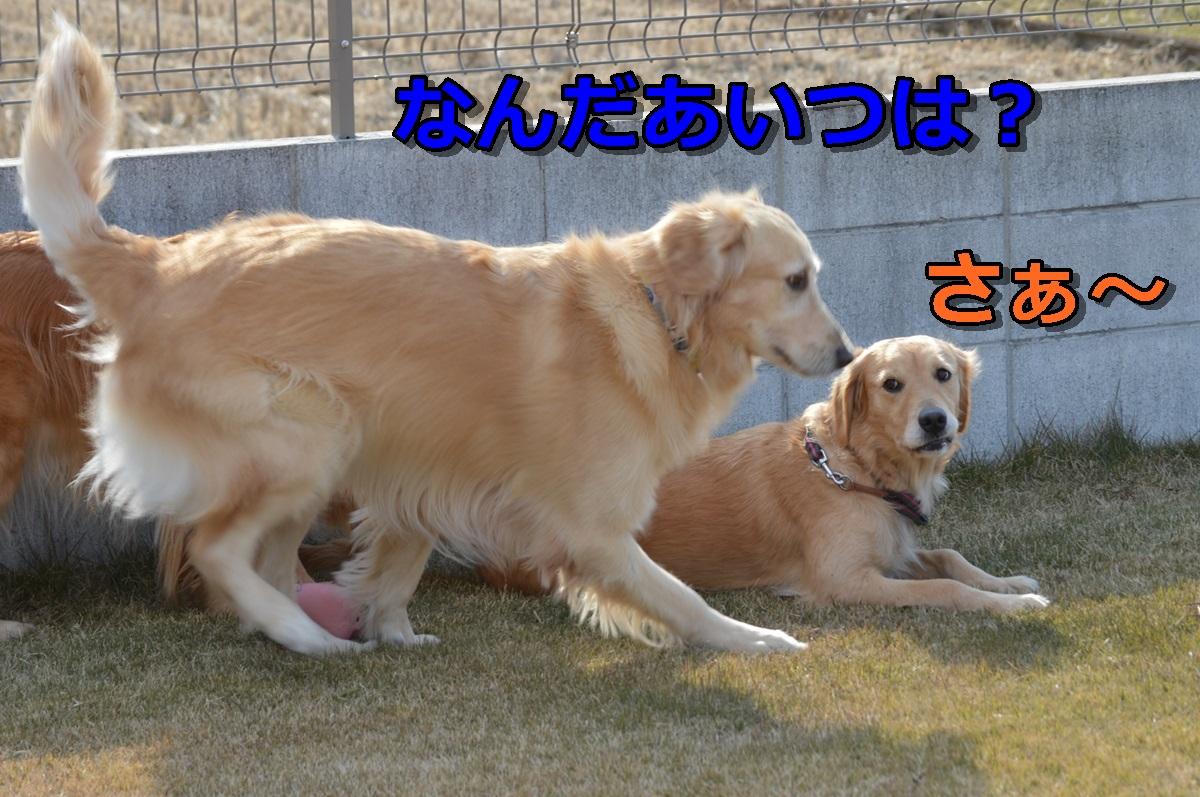 DSC_26-010.jpg