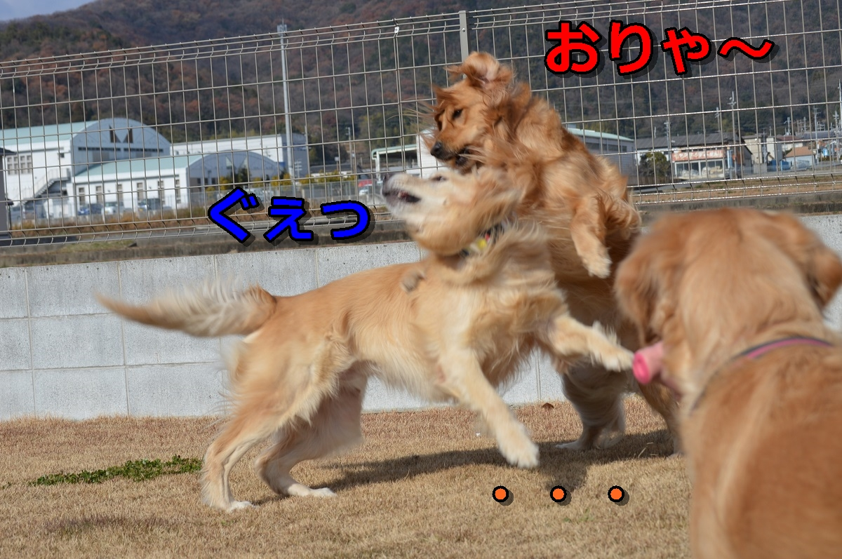 DSC_97.jpg