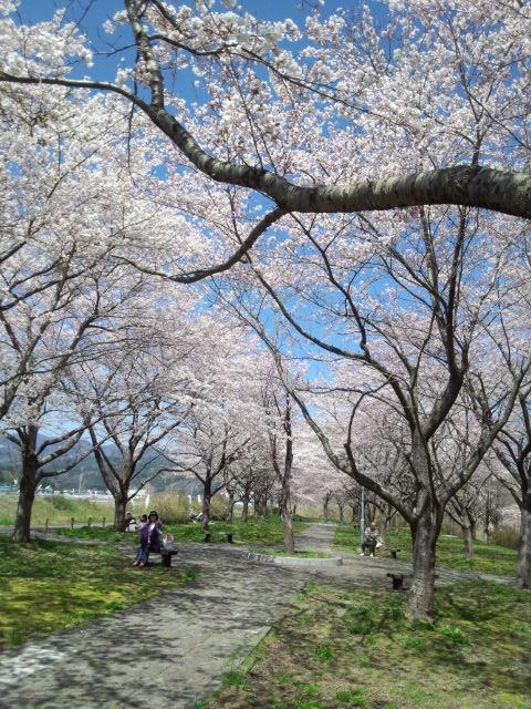 0428桜つつみ公園1