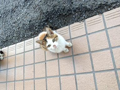 2012.10.31 和束猫1