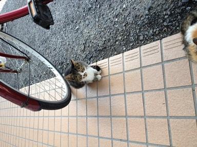 2012.10.31 和束猫2