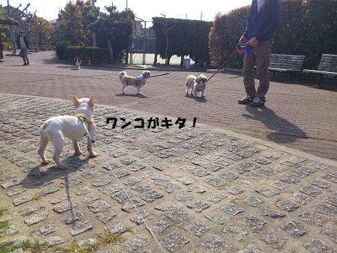 DSC_2651_20130416000804.jpg