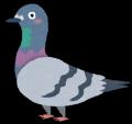 bird_hato[1]