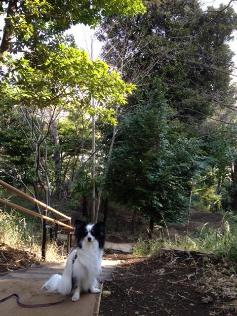 高輪子供の森1