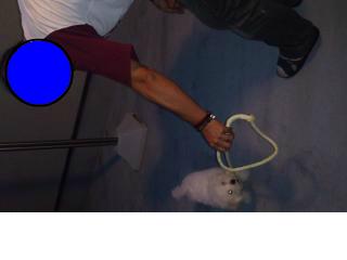 snap_315chocky_2012911236.jpg