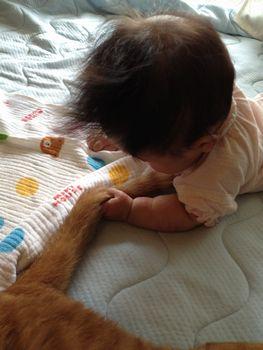 娘とネコ6