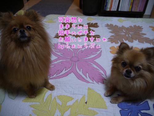 QirXkn3vQ8rT4vF1356436337_1356436465.jpg