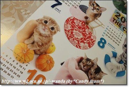 THE CAT 2014カレンダー