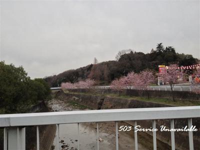 写真-2013_03_22-1