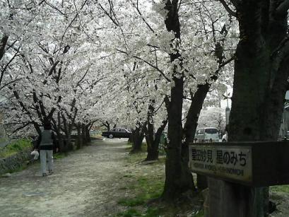 50妙見桜入口2.JPG
