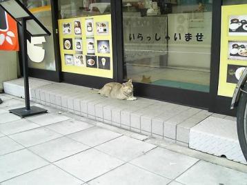 弁当屋さんとネコ.JPG
