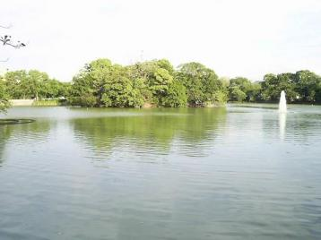 公園池.JPG
