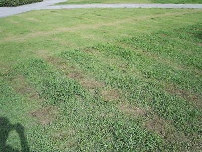 芝に残る跡.JPG