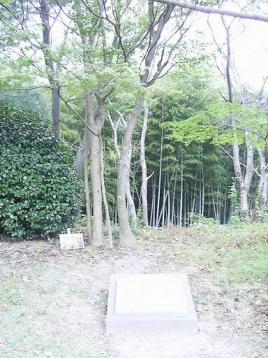 50 記念植樹.JPG