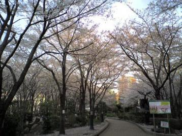 川口の桜2.JPG