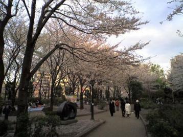 川口の桜6.JPG