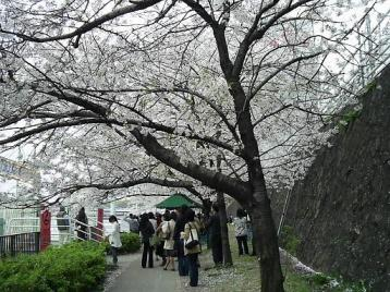 天満橋水上バス乗り場.JPG