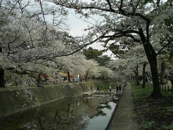 夙川公園 苦楽園付近07.JPG