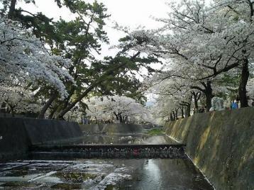 夙川公園 苦楽園付近01.JPG