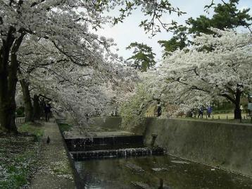 夙川公園 苦楽園付近06.JPG