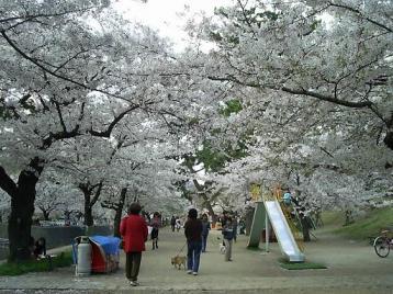 夙川公園 苦楽園付近03.JPG