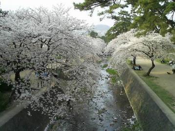 夙川公園 苦楽園付近09.JPG