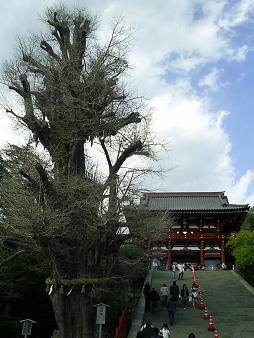 八幡さま (3).JPG
