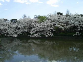 源氏池 (2).JPG