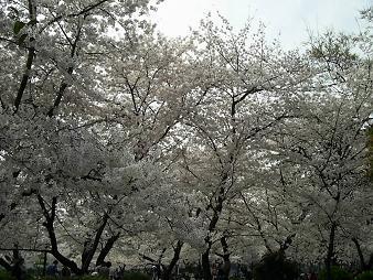 住吉公園 (1).JPG