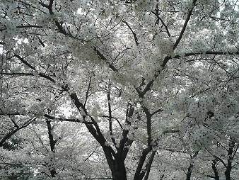 住吉公園 (4).JPG