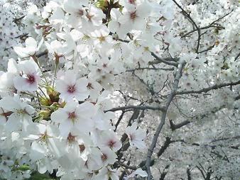 住吉公園 (3).JPG