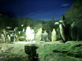 海遊館のペンギン.JPG