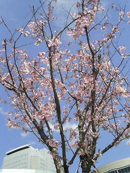 オアシス21の桜.JPG