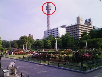 080515-バラ園とマリンタワー.JPG